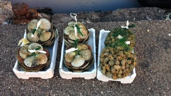 Consorzio pescatori vongole sotto accusa