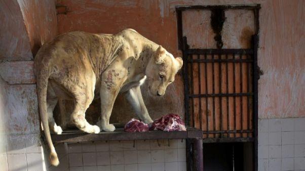 Au Pakistan, le zoo de Karachi tente de tourner le dos à son passé colonial