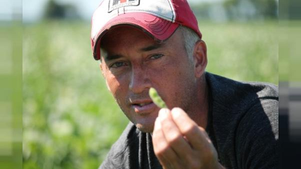 Guerre commerciale: les cultivateurs américains de soja entre deux feux