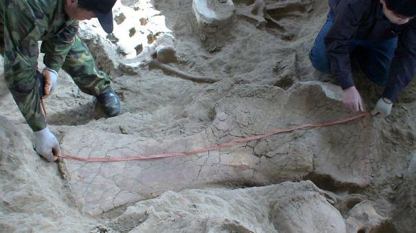 اكتشاف حفريات ديناصور سوروبود يعيد التفكير في تاريخ الفصيل طويل العنق