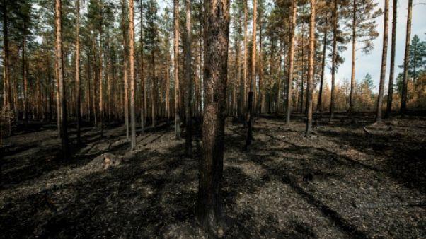 Dans la forêt suédoise, les flammes du crépuscule boréal