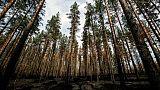 Forêt carbonisée à Korskrogen en Suède, le 25 juillet 2018