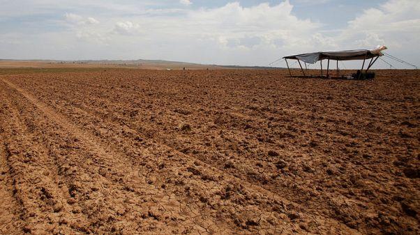 تقرير خاص-قلب الأرض الزراعية في العراق يموت عطشا
