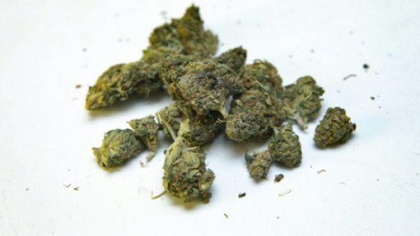 La cannabis thérapeutique va être autorisé au Royaume-Uni sur prescription