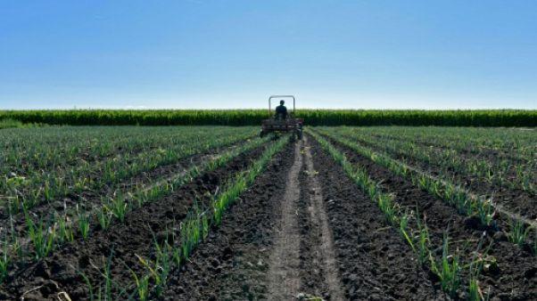 """L'agriculture """"hors du champ"""" des discussions commerciales avec les USA (UE)"""