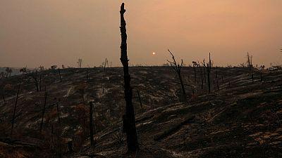 ارتفاع عدد الوفيات جراء حرائق الغابات في كاليفورنيا إلى خمسة