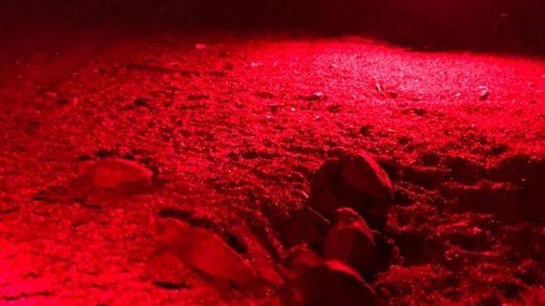 Nate 45 tartarughe marine a San Vincenzo