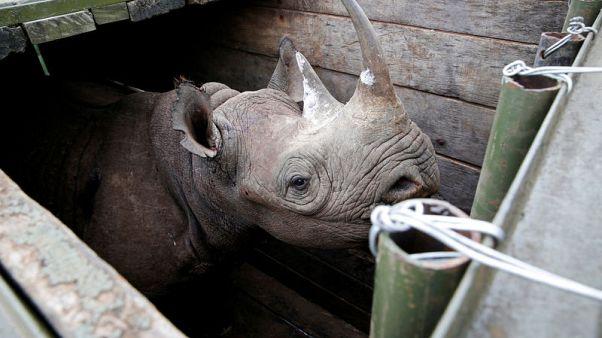 Poachers kill rhino in Kenyan national park - agency