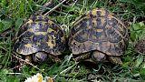 Abbandonate 16 tartarughe, indagine