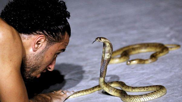 مصري في شرم الشيخ يروض الأفاعي لجذب السياح
