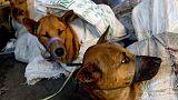 إندونيسيا تسعى لحظر تجارة لحوم الحيوانات الأليفة والنادرة