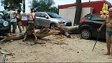 Cade albero su strada, nessun ferito