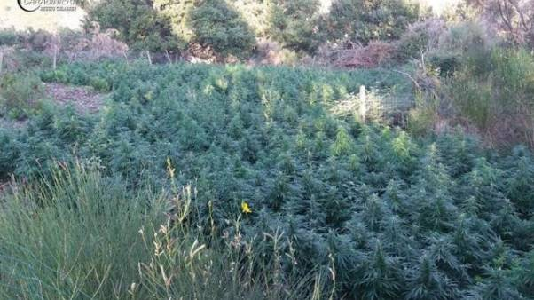 Scoperte oltre 5 mila piante droga