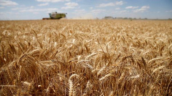 الجفاف يقلص محصول القمح في الاتحاد الأوروبي وتوقعات بانخفاض الصادرات