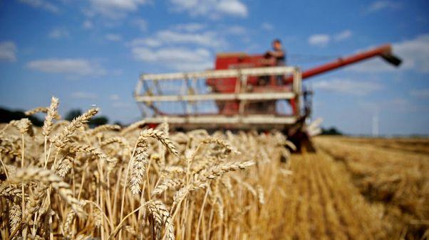 EU wheat sees gains erased by bearish USDA report