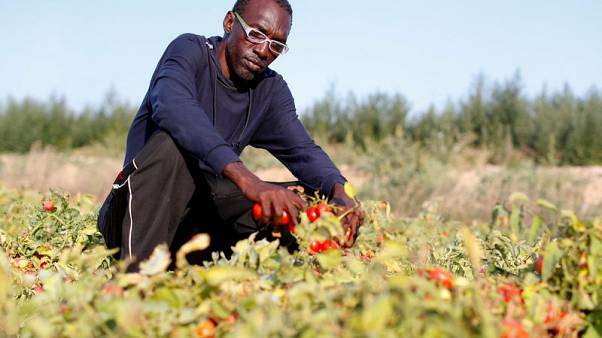 Fatal crashes reveal plight of Italy's African labourers