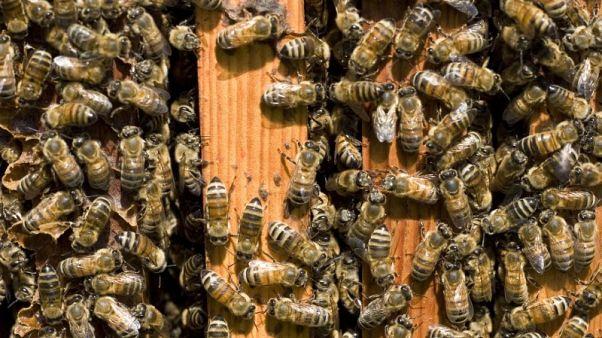 كندا تمنع استخدام مبيدات حشرية في الزراعة لخطورتها على النحل