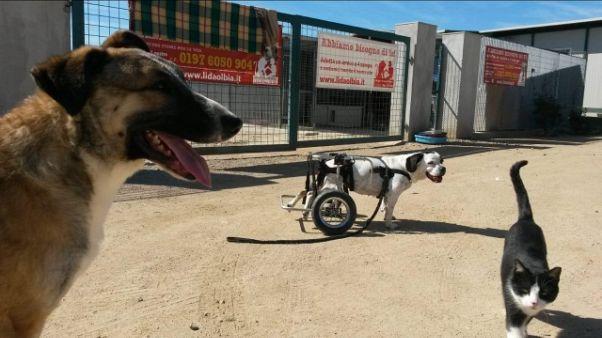 Gallura,emergenza abbandoni cani e gatti