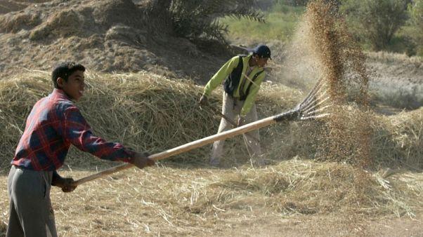 تجار: العراق يشتري 60 ألف طن من الأرز من أمريكا وأوروجواي