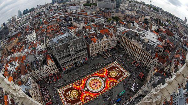 سجادة زهور زاهية تأسر الأنظار في وسط بروكسل رغم حرارة الصيف
