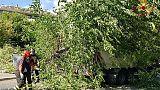 Albero cade su auto a Roma, due feriti