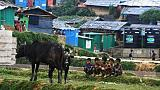 Les Rohingyas célèbrent la fête du sacrifice, un an après le début de la crise birmane