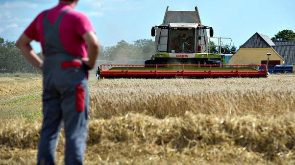Danish farmers' drought losses deepen, more bankruptcies seen