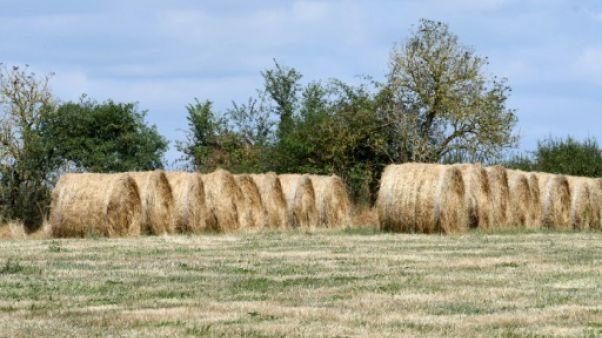 """""""Il n'y a plus d'herbe"""": l'élevage durement touché en Europe par la sécheresse estivale"""
