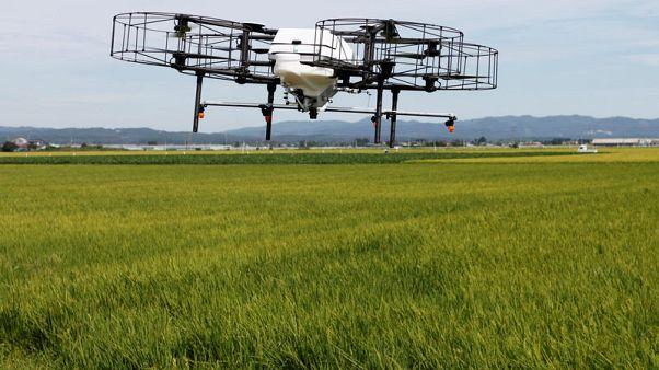 طائرات مسيرة تقدم يد العون لمزارعين يابانيين عجائز