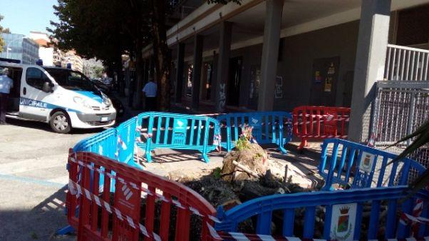 Cade albero a Caserta, senegalesi feriti