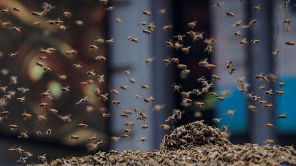 سرب من النحل يحاصر تايمز سكوير في نيويورك ويثير فضول السياح