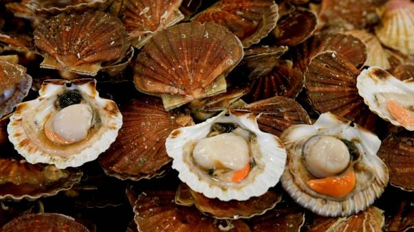 مساع لاحتواء نزاع بين صيادين فرنسيين وبريطانيين على منطقة غنية بالمحار