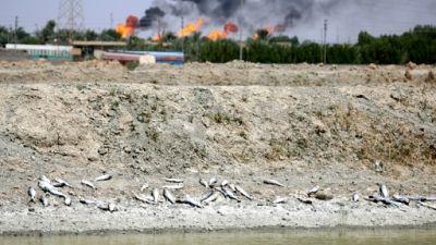 A Bassora, l'eau salée et polluée détruit tout sur son passage