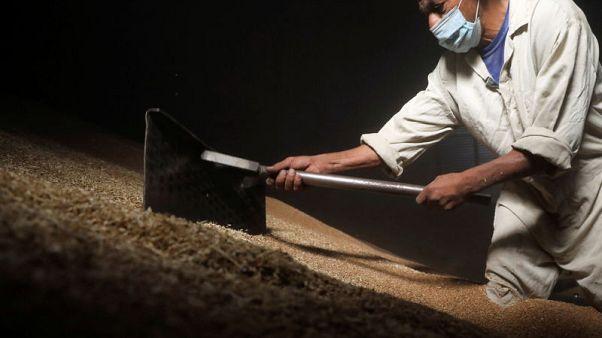 مصر تطلب قمحا للشحن في 21-30 أكتوبر