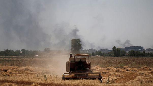حصري-العراق ينوي خفض مساحة القمح المروية للنصف بسبب شح المياه
