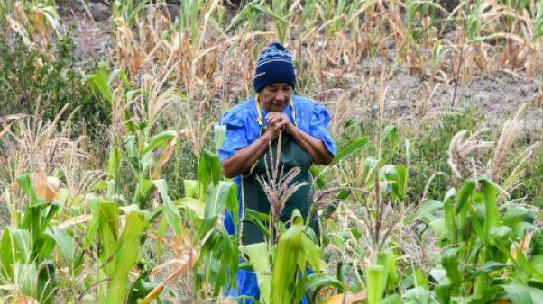 Sécheresse en Amérique centrale : la foi des paysans ne suffit plus