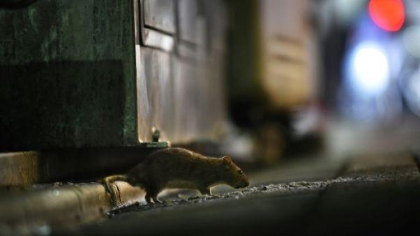 Opération Tsukiji: rideau sur le marché tokyoïte, haro sur les rats
