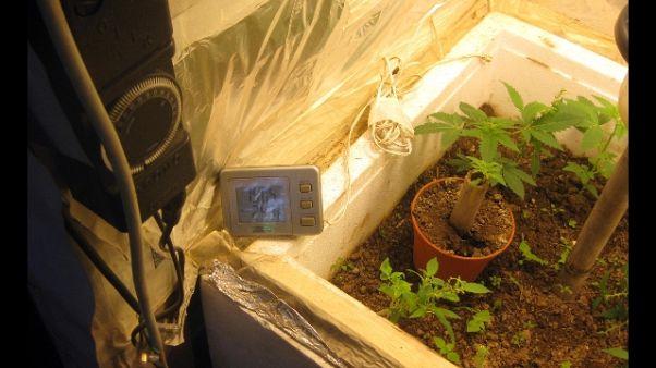 Musica per coltivare marijuana,arrestato