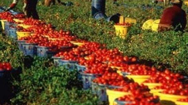 Arrestato 'caporale' in Puglia