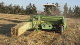 تجار: تونس تطرح مناقصة لشراء القمح الصلد واللين وعلف الشعير