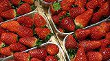 الشرطة: العثور على إبر في ثمار الفراولة في ولايتين أخريين في استراليا