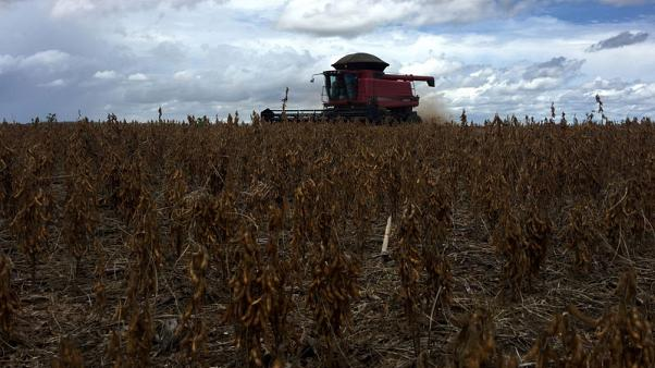 U.S. soy seizes EU market, bolstering Trump trade deal