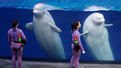Tidal wave of Chinese marine parks fuels murky cetacean trade