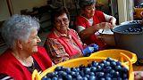Plum marmalade from the heart - Hungarian grandmas' way of charity
