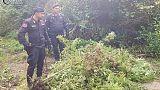 Coltivavano canapa, arrestati 2 migranti
