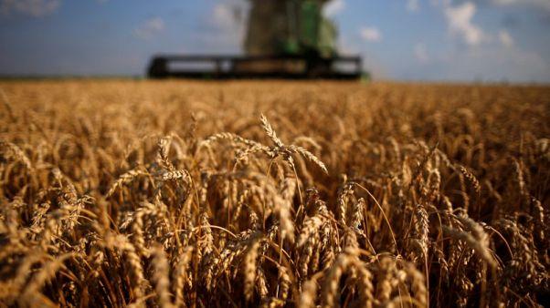 العراق يشتري 100 ألف طن من القمح الأمريكي والاسترالي