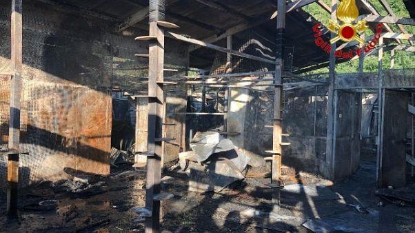 Brucia gattile, morti più di 100 mici