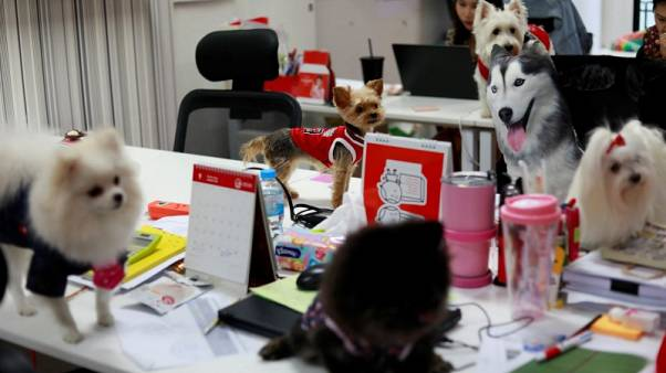 Putting on the dog - Thai ad agency employees bring pets to work