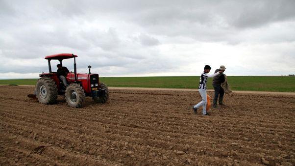 العراق يقلص مساحة زراعة محاصيل الشتاء 55% بفعل نقص المياه