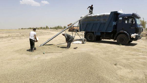 مصادر: العراق يشتري 50 ألف طن من القمح الكندي